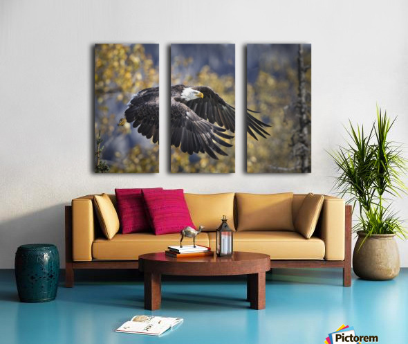 Bald Eagle in flight, Alaska, Autumn Split Canvas print