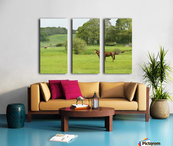 Horse in field; Morpeth, Northumberland, England Split Canvas print