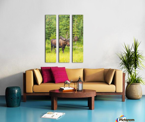 Bull moose in velvet, Kincaid Park, Anchorage, Southcentra Alaska, summer Split Canvas print