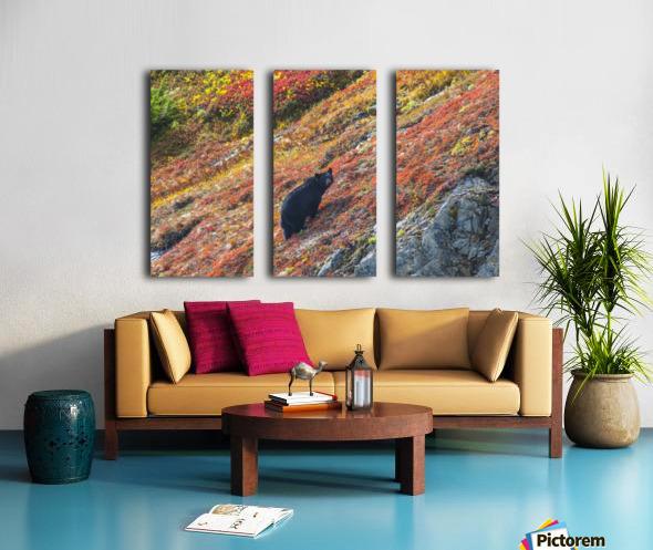 Black bear (Urus Americanus) standing on a colorful autumn hillside, Kenai Fjords National Park, Southcentral Alaska Split Canvas print