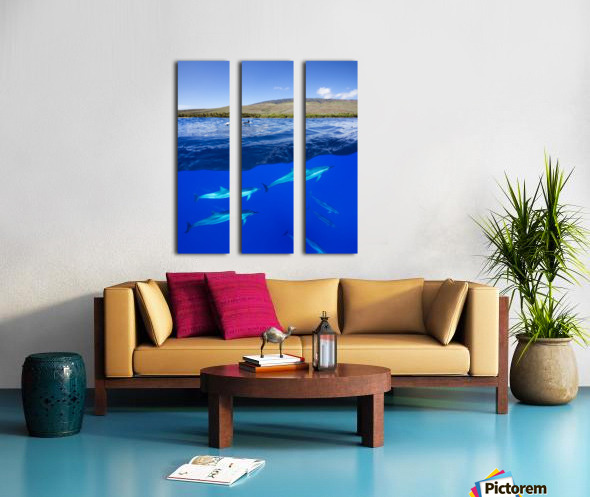 A split view of spinner dolphin (Stenella longirostris) below water and the island of Lanai above; Hawaii, United States of America Split Canvas print