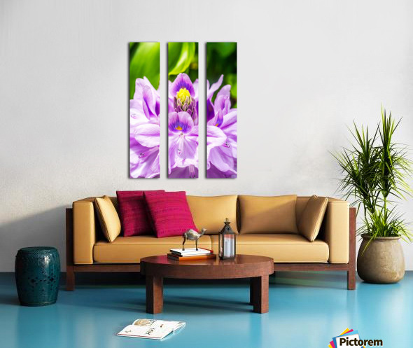 Water Lily Split Canvas print