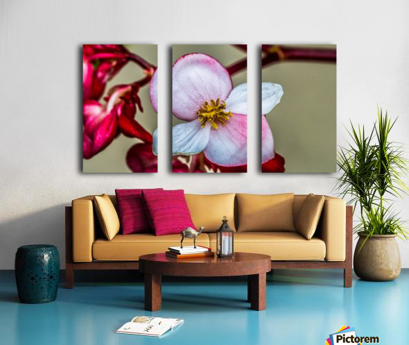 Red Flower Split Canvas print