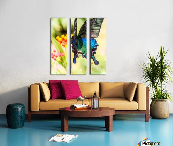 Butterfly not in the sky Split Canvas print