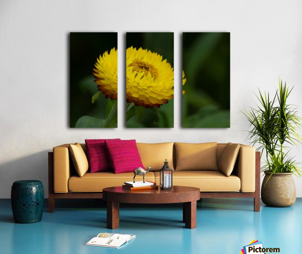 Nature and Flowers 7 Split Canvas print