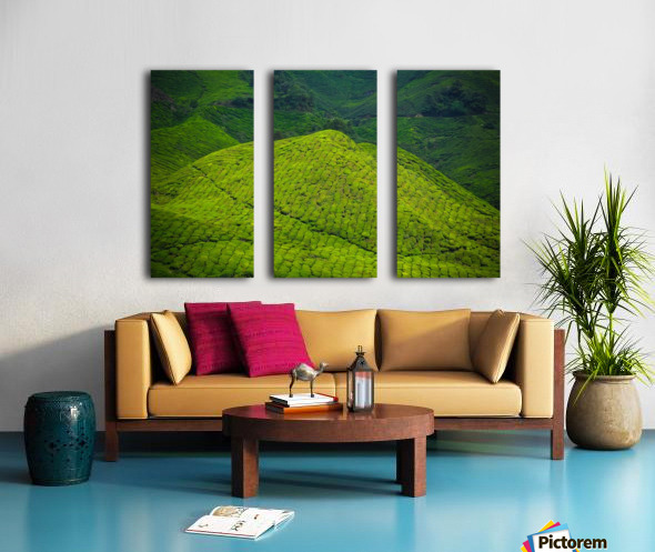 Tea plantations Split Canvas print
