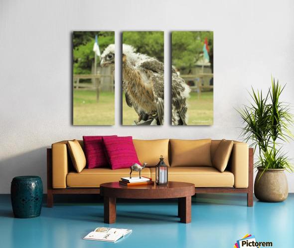 baby hawk1 Split Canvas print