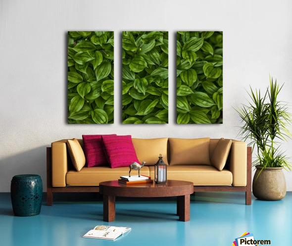 Hosta Split Canvas print