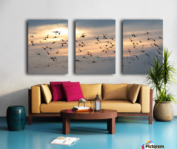Coming home to roost Split Canvas print