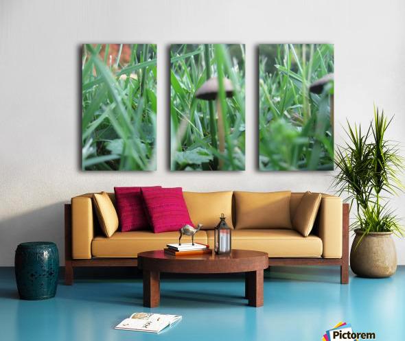 Mushroom 3 Split Canvas print