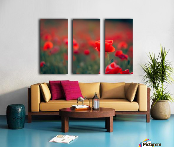 Beautiful Sunset poppy flowers Split Canvas print