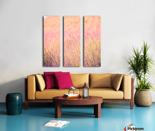 Sunset lavender flowers, instagram effect Split Canvas print