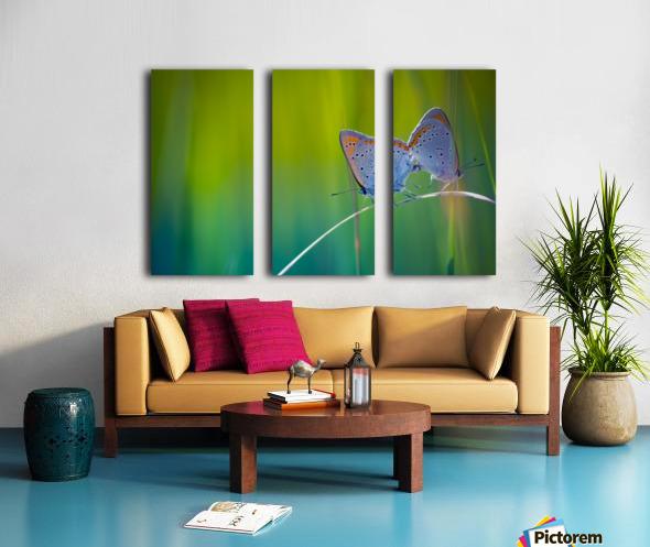Butterfly summer background Split Canvas print