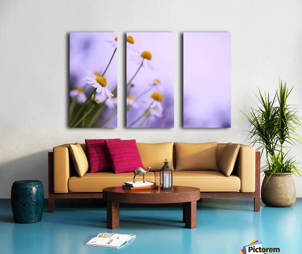 Chamomile in spring Split Canvas print