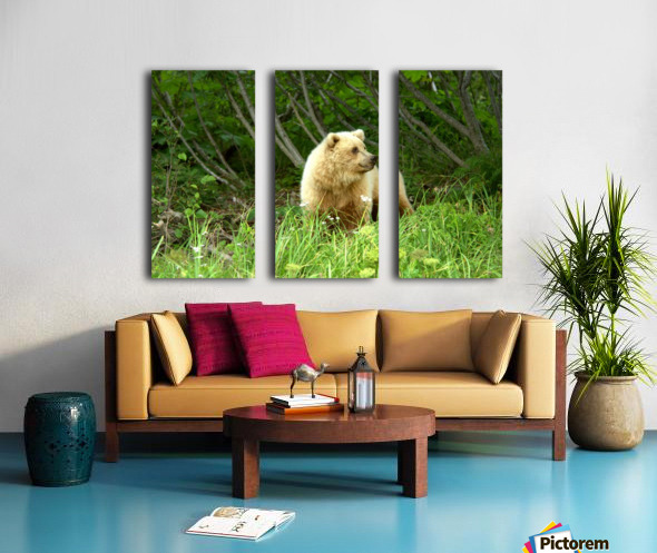 Two Year Old Grizzly Split Canvas print