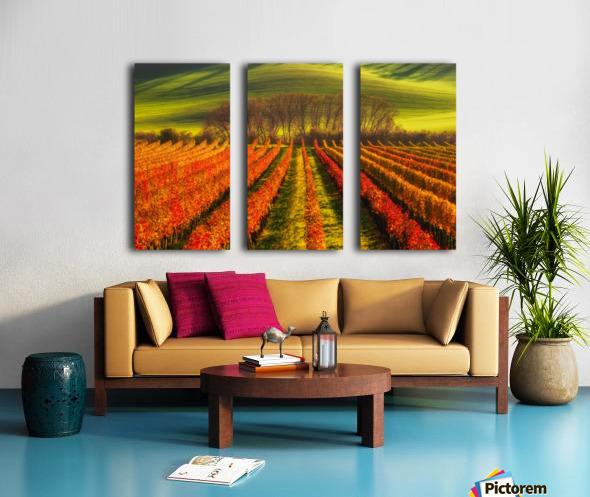 vine-growing Split Canvas print