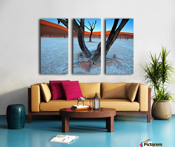 Ancient trees in the Vlei Split Canvas print