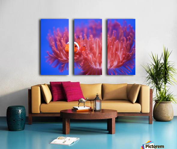 Finding Nemo Split Canvas print