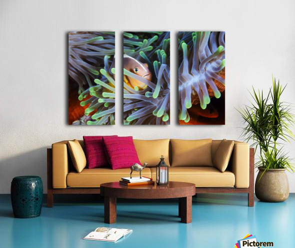 Clownfish Split Canvas print