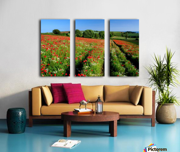 Ablaze of colour Split Canvas print