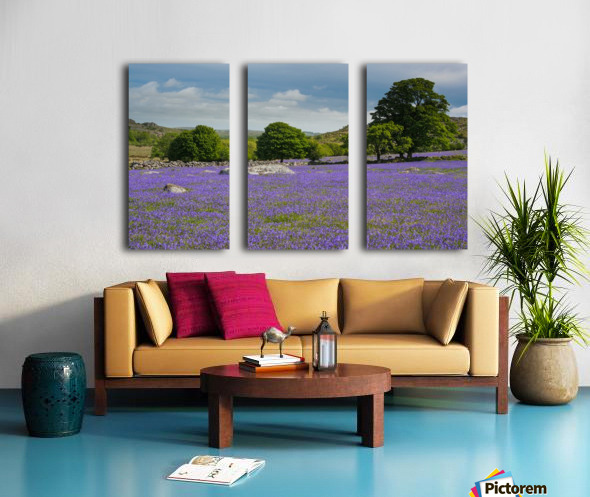 Emsworthy bluebells Split Canvas print