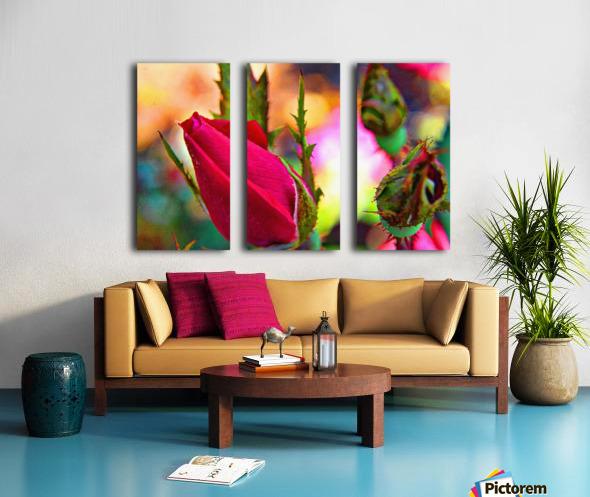 Rosebud Split Canvas print