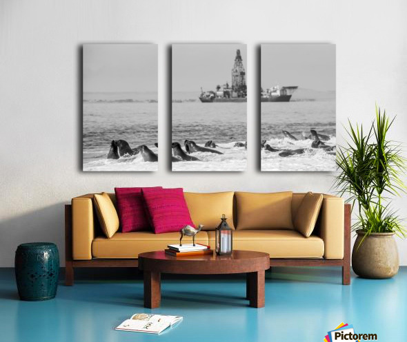 Seals by Oil Drill  Split Canvas print