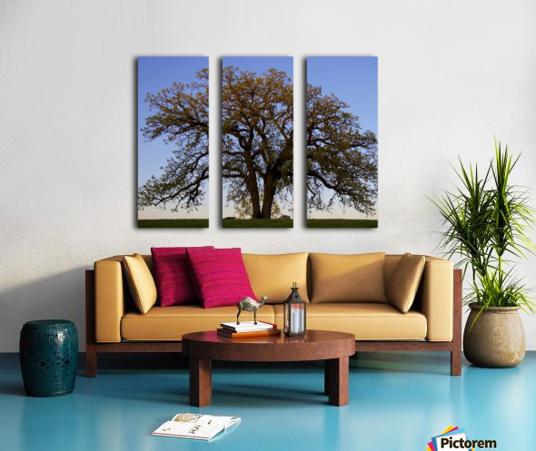 The Wishing Tree Split Canvas print