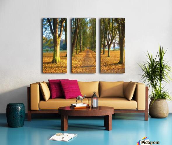 Autumnal Avenue Split Canvas print