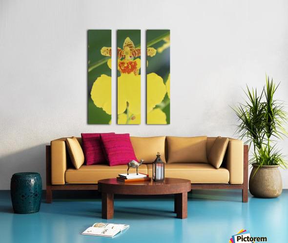 orchid3 Split Canvas print
