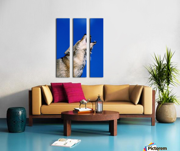Howling Coyote Split Canvas print