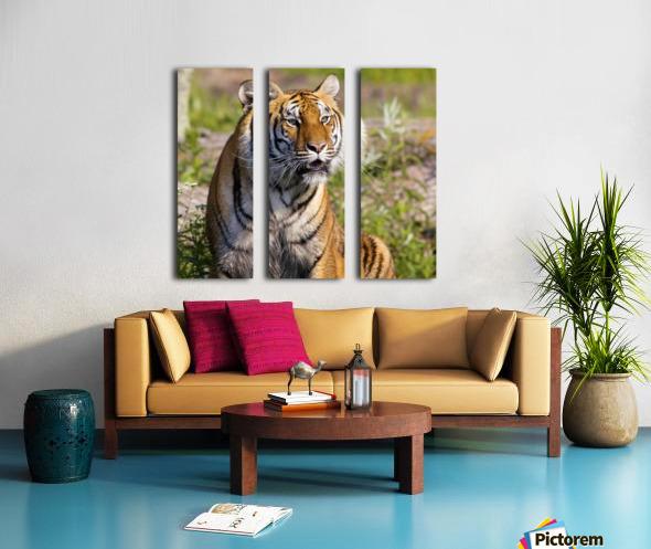 Tiger Watching Split Canvas print