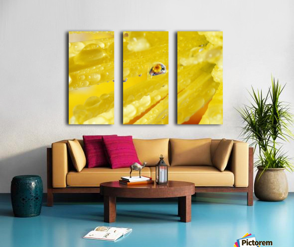Yellow Flowers Reflected In Dew Drop Split Canvas print
