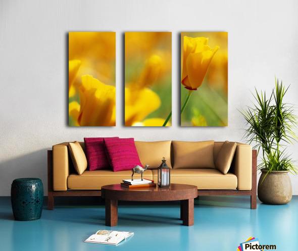 Yellow Poppy Split Canvas print