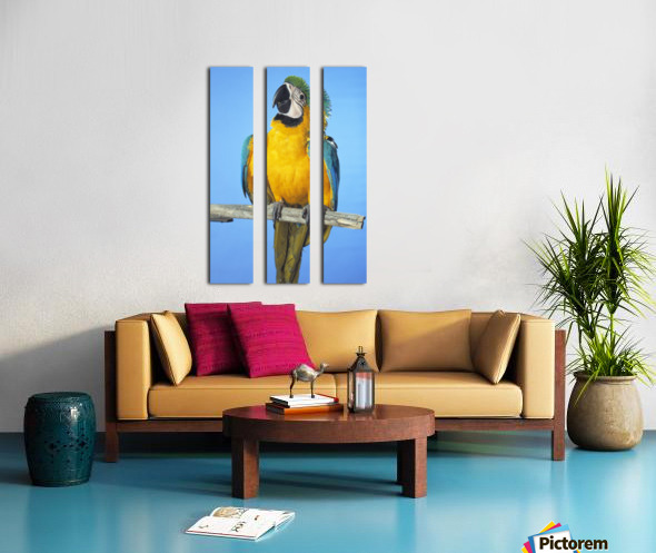 Blue-And-Gold Macaw Split Canvas print