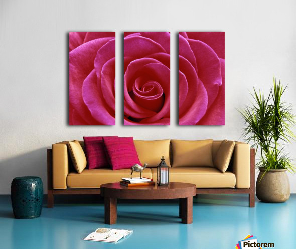 Rose Blossom Split Canvas print