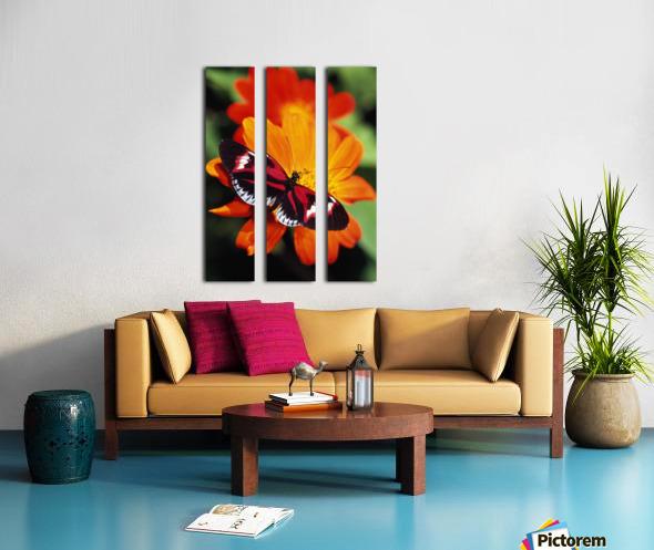 Butterfly On Flower Split Canvas print