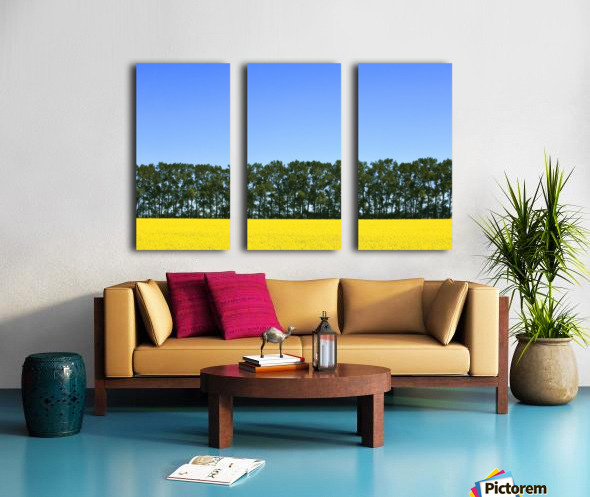 Canola Field And Trees Split Canvas print