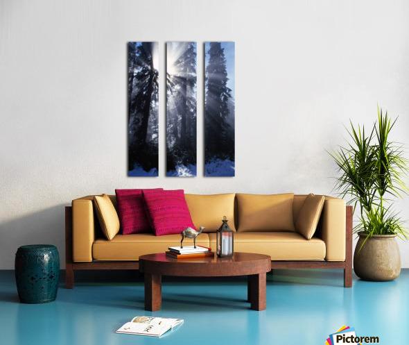 Sunbeams Through Pine Trees Split Canvas print