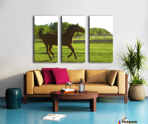 Horse Galloping Split Canvas print