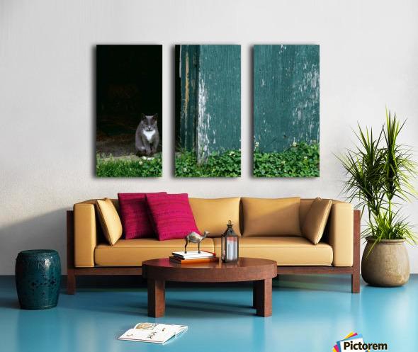 Cat In A Doorway Split Canvas print
