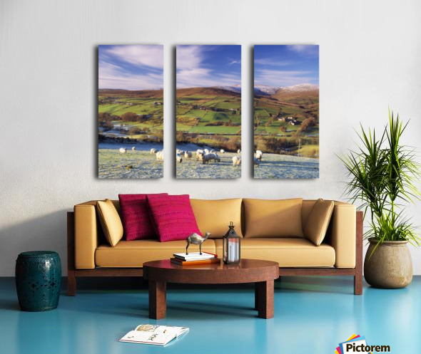 Sperrin Mountains, County Tyrone, Ireland, Sheep Split Canvas print