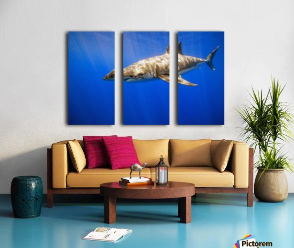 Great White Shark Split Canvas print