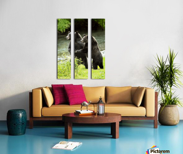 Two Grizzly Bears Split Canvas print
