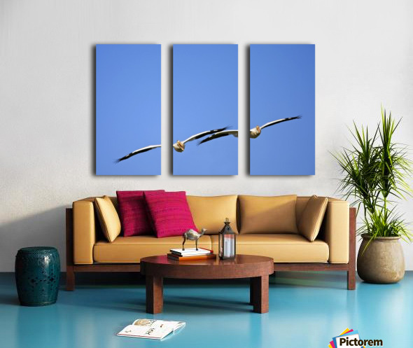 Two Pelicans In Flight Split Canvas print