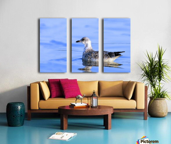 Young Gull Swimming Split Canvas print