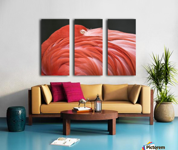 Close Up Of A Flamingo Resting Its Head On Its Back Split Canvas print