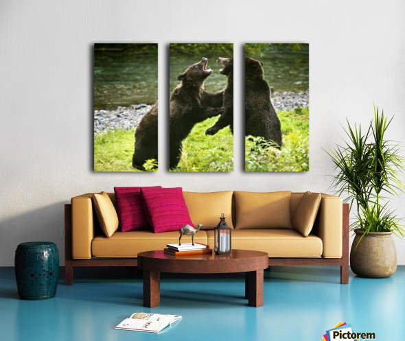 Two Grizzly Bears Fighting Split Canvas print