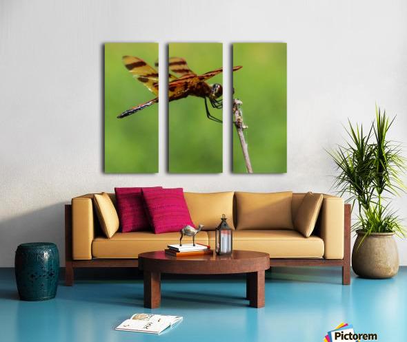 Dragonfly Split Canvas print