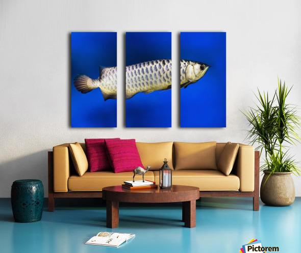 Fish Split Canvas print